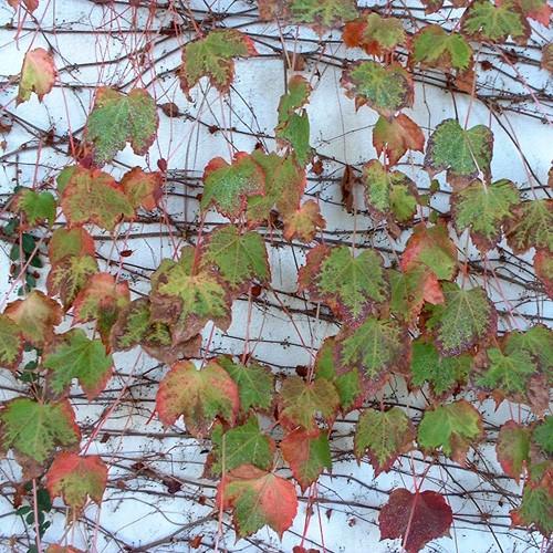 11-2002-1229-06-leaf-pattern