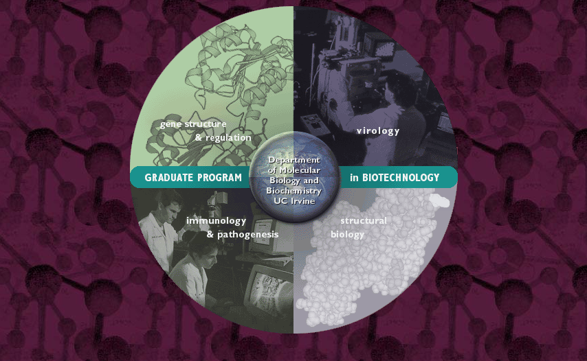 UC Irvine Graduate Program in Biotechnology Custom Site - Original Sketch and Teaser Site