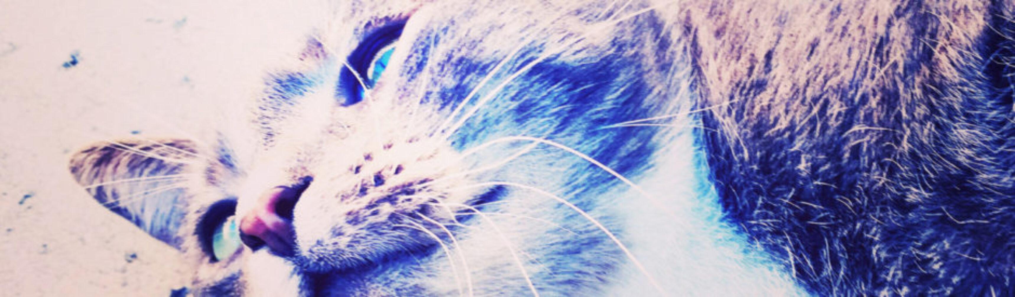 Day-051_01-Eric-Scott-Lullabies-For-Cats